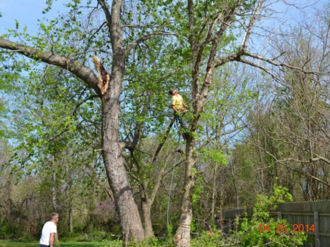 3 signs it's time to remove a tree from your yard